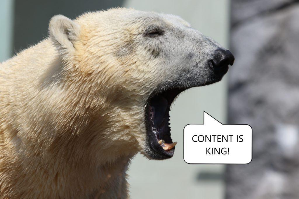 Der kleine Contentbär sagt Content is King